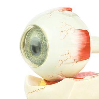 desprendimiento_retina